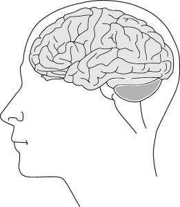 brain on Methadone
