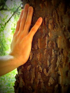 hand on a tree fighting Holiday Blues