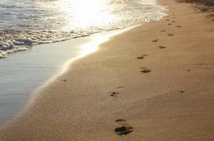 The Shore Beach Photo