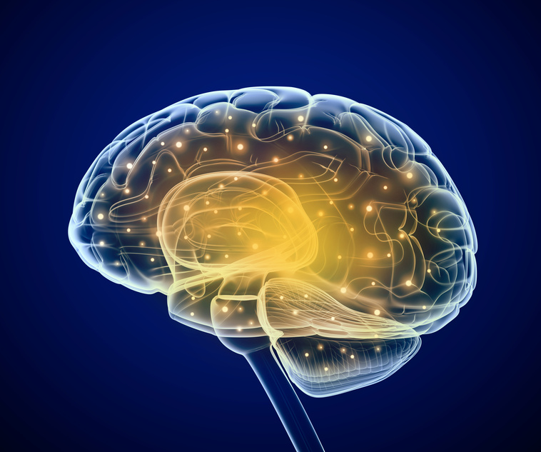 Brain impulses. and the orexin system