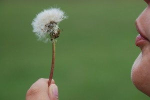 Serenity of blowing a dandelion