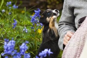 puppy-779291_640