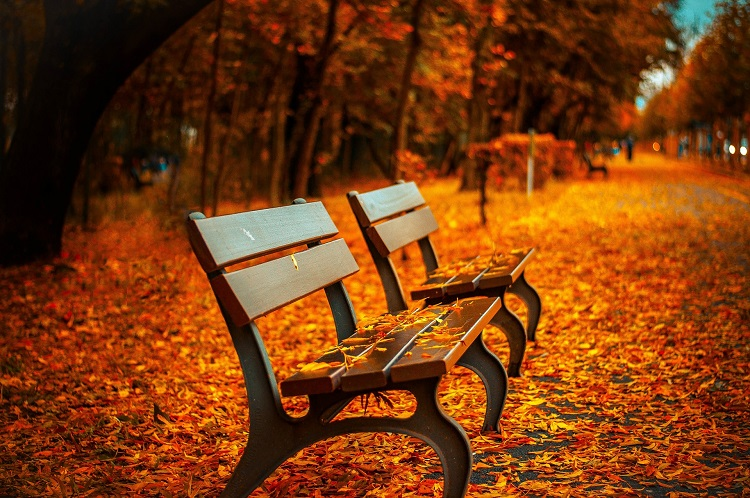 bench in park in fall
