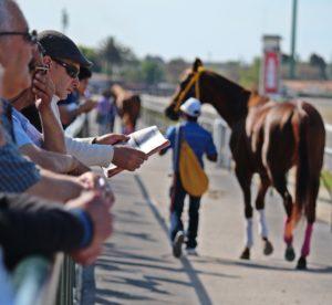 Gambling on horse racing