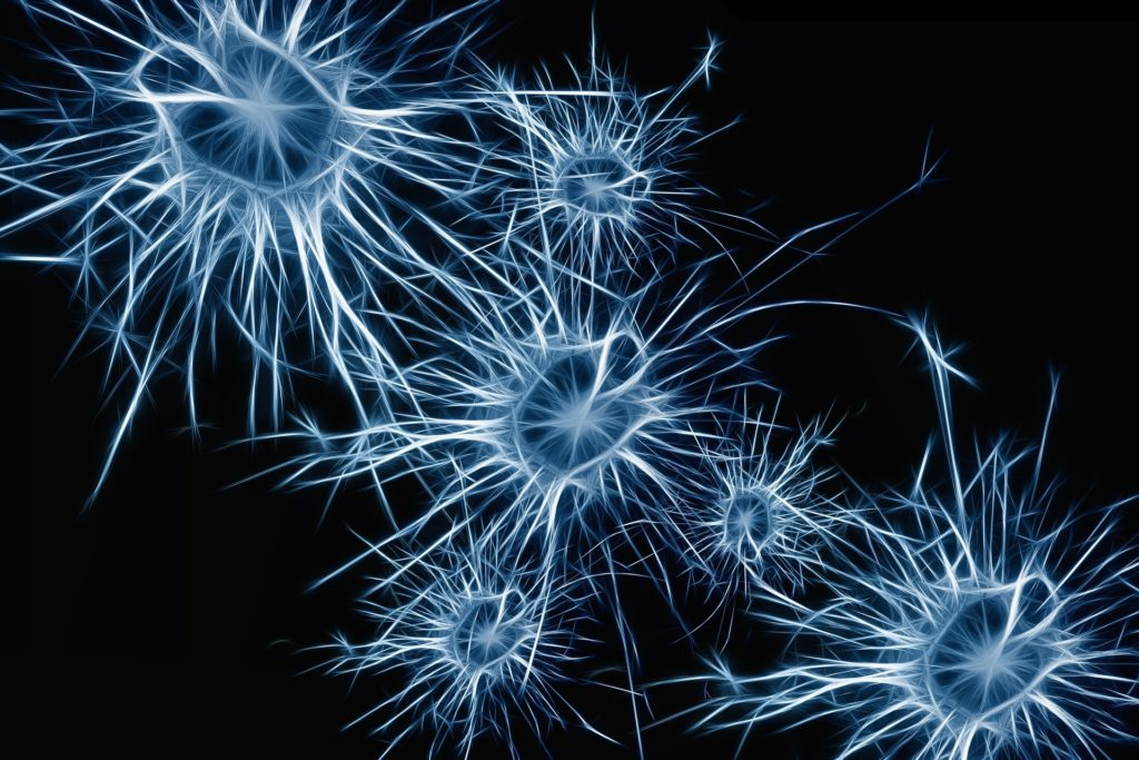 Brain Neurons and the Opioid System