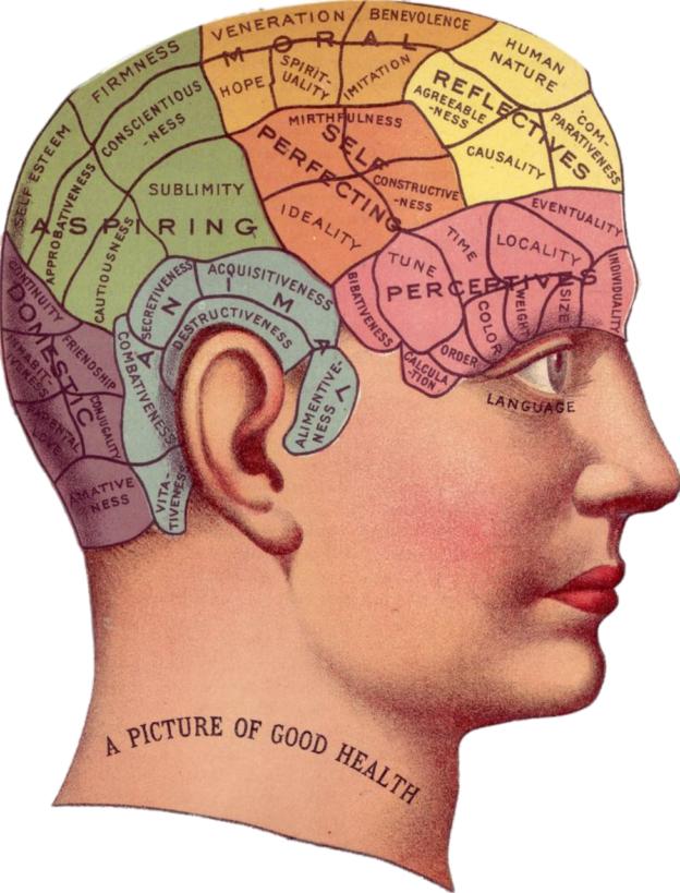 Image of brain in skull