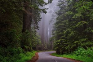 Nature Road Through Redwood National Park