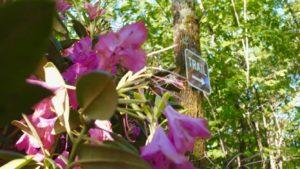 Focus Trail Image - 9-4-20